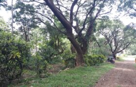 584 SQM Residential Lot in Montalban Rizal