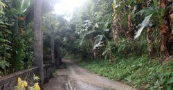 1,035 SQM Farm Lot in Antipolo