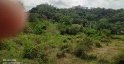 10,266 SQM Vacant Lot in Bamban, Tarlac