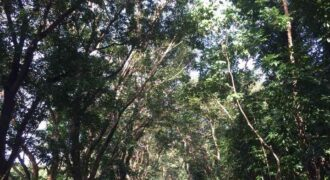 For sale: 1,449 sqm residential lot in Town & Country Estates, Antipolo