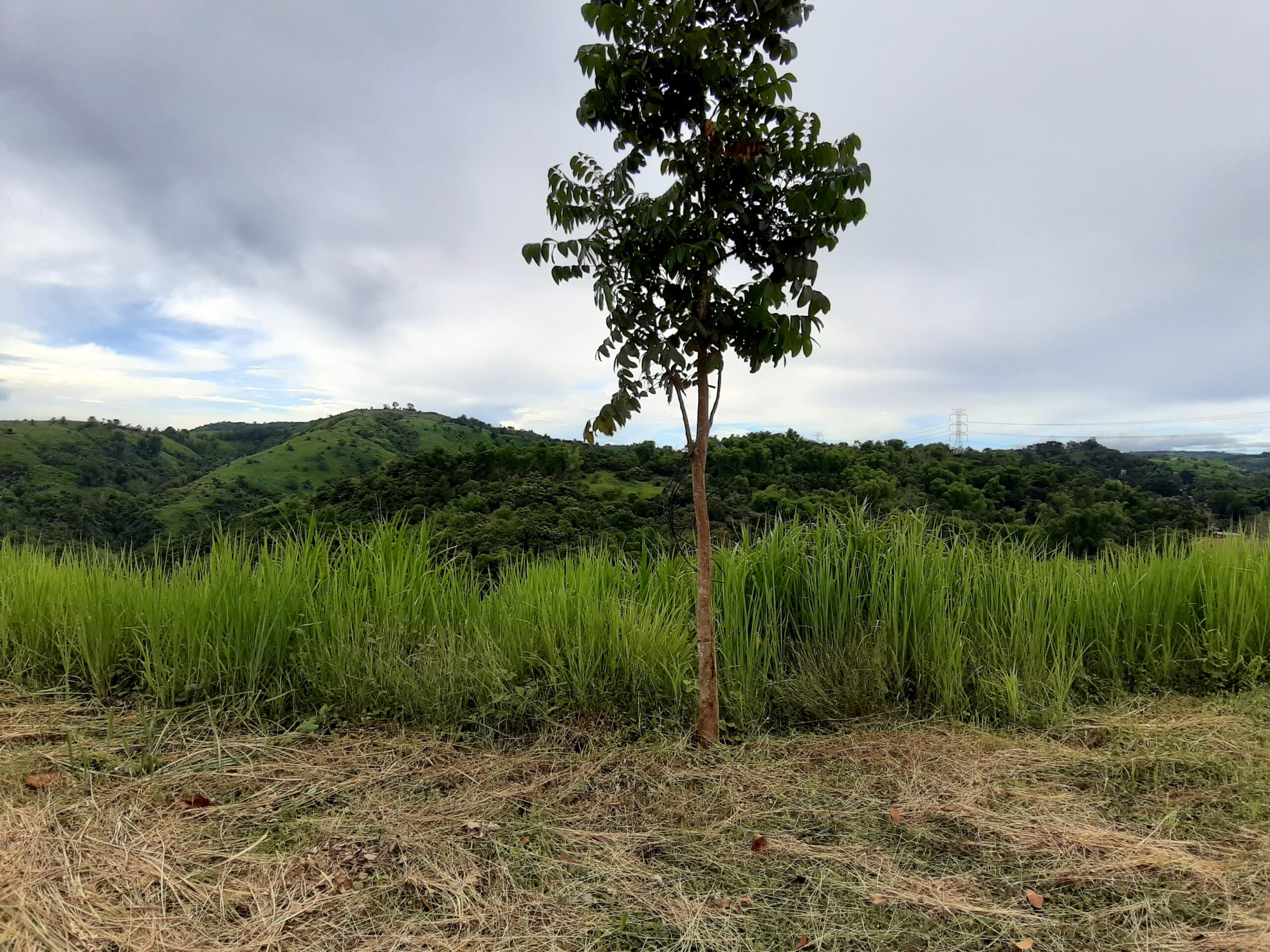 Lot with Mountain View at Sun Valley-West End, Antipolo